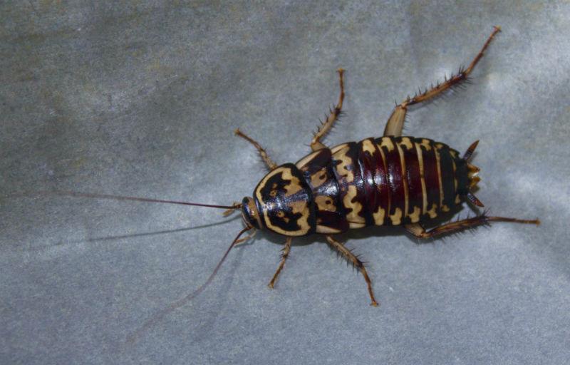 How To Keep Roaches Away While You Sleep Tips Tricks