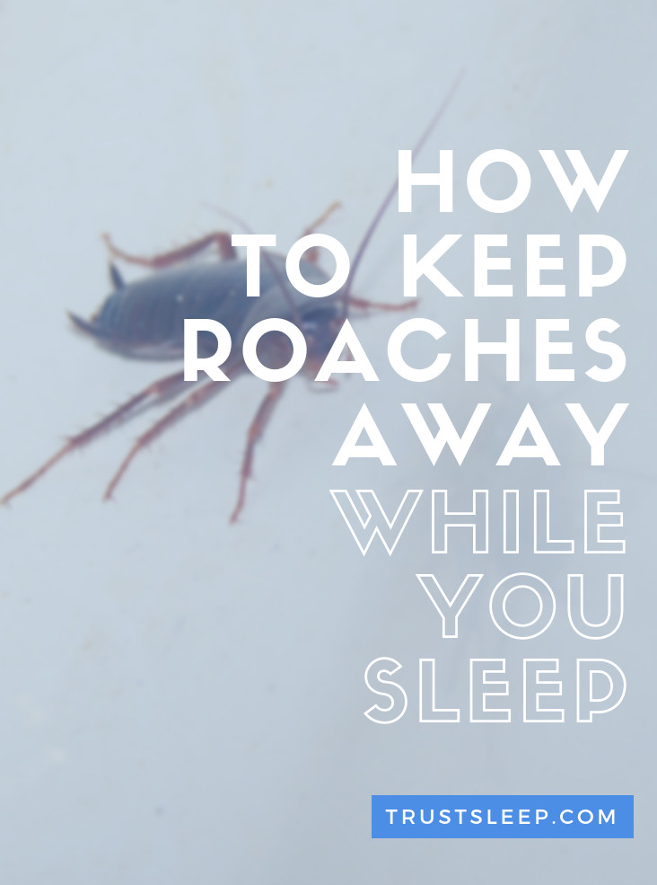 how to keep roaches away while you sleep